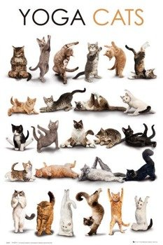 plakat YOGA - CATS