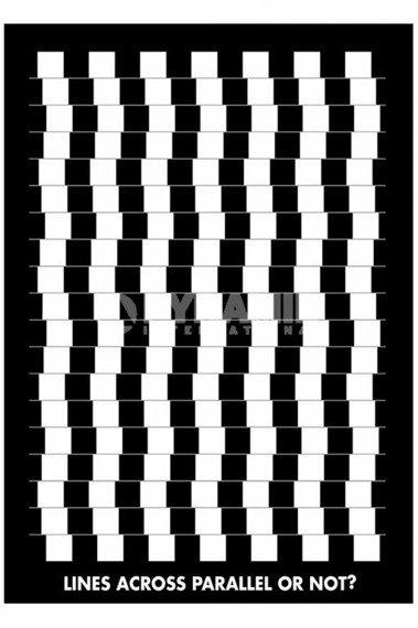 plakat OPTICAL ILLUSION - LINES
